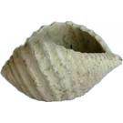 Räuchermuschel antik